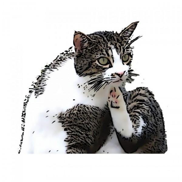 Antiparazitare Pisici